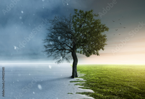 Leinwand Poster Baum steht halb im Winter und halb im Frühling