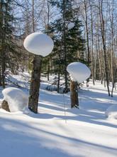 The Snow Cap On The Broken Trees.