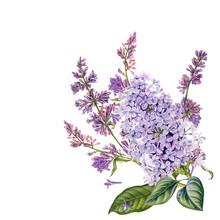 Watercolor Hand Drawn Purple L...