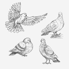 Set Of Hand Drawn Doves. Sketch Of Doves