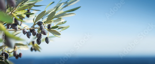 Fotografia  Olives by the Sea Panorama