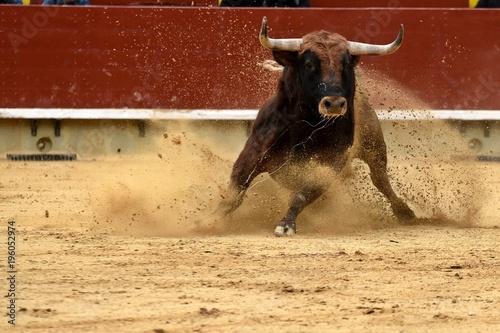 toro en plaza de toros de españa
