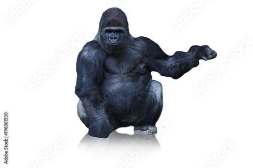 Fotografía funny monkey