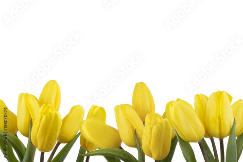 Foto op Canvas Bloemen floral border frame of yellow tulips on white background isolated