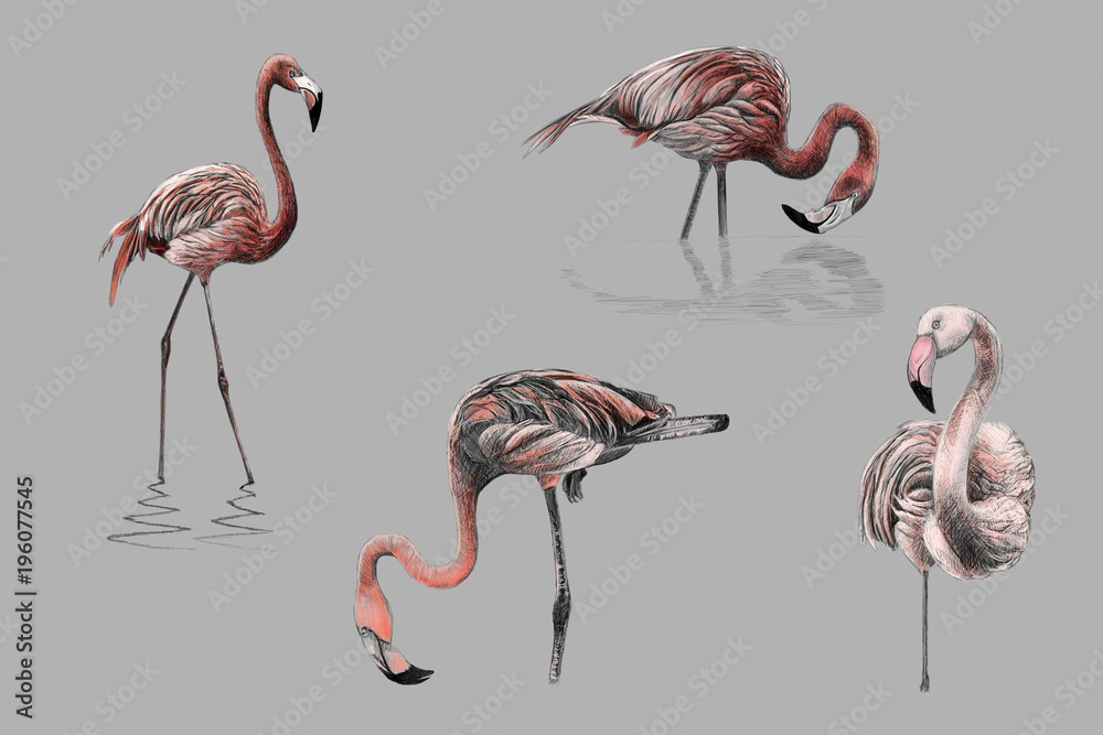 Monochromatic pink color hand drawing flamingos