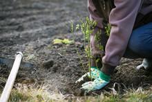 Planting Blueberries Bush In E...