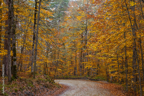 Photo Stands Road in forest Lovely Autumn Colors of Nature