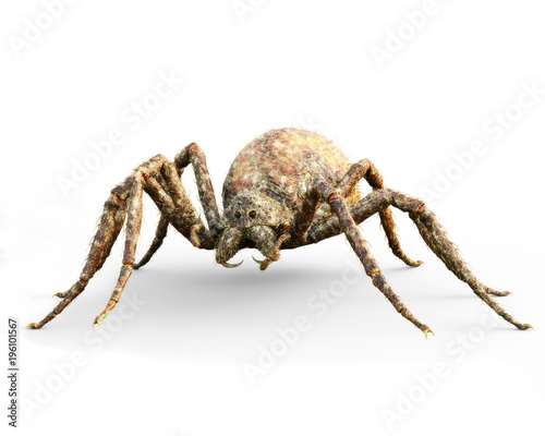 Enormous plague ridden spider isolated on a white background Wallpaper Mural
