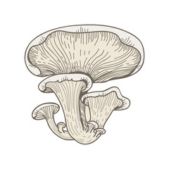 Illustration of mushroom
