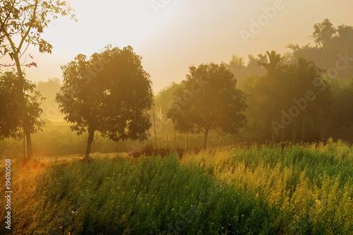 Fototapeta Morning scene , agriculture land - rural India obraz na płótnie