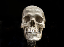 Human Scull On Black Isolate S...