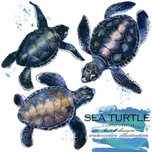 Sea Turtle Hand Drawn Watercolor Illustration Set