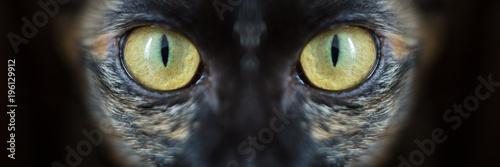 Photo closeup of a cat's eye, Black background