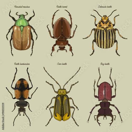 Fotografia Set of beetle illustrations