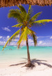 Tropical beach. Shade of palm trees, blue ocean, white sand.