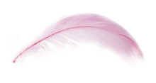 Beautiful Pink Feather On A White Background