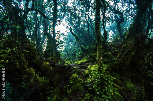 Amazing jungle trail with thick green trees and branches in Mossy Forest, Malaysia