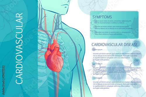 Photo human circulatory vascular system