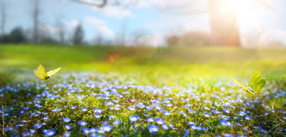 Fototapety, obrazy: abstract nature spring Background; spring flower and butterfly