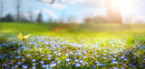 Fototapeta Kwiaty - abstract nature spring Background; spring flower and butterfly