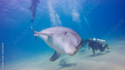Photographie dolphin