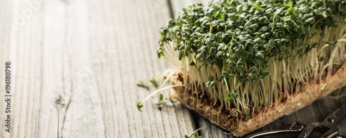 Canvas Prints Fresh vegetables Garden cress, young plants on old wooden table. Lepidium sativum, edible herb. Microgreen. Peppery flavor and aroma. Also called mustard and cress, garden pepper cress, pepperwort or pepper grass.