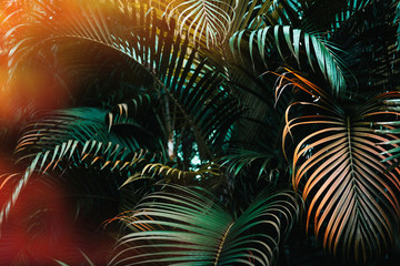 Panel Szklany 3D Deep dark green palm leaves pattern with bright orange sun flare effect. Creative layout, toned, horizontal