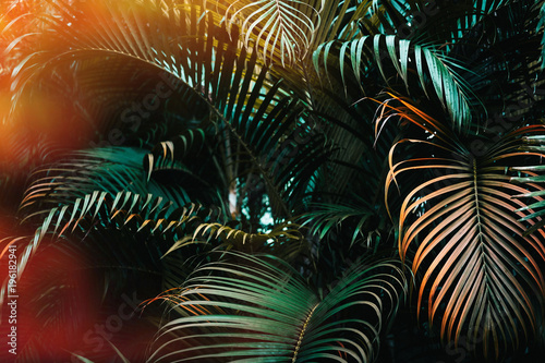 Spoed Foto op Canvas Natuur Deep dark green palm leaves pattern with bright orange sun flare effect. Creative layout, toned, horizontal