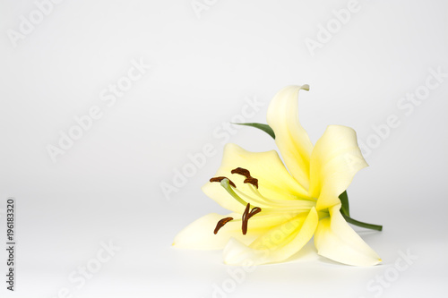 Fotomural Yellow lily