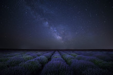 The Milky Way Galaxy Rising Above Lavender Field