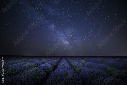 Obraz na płótnie The Milky Way galaxy rising above lavender field