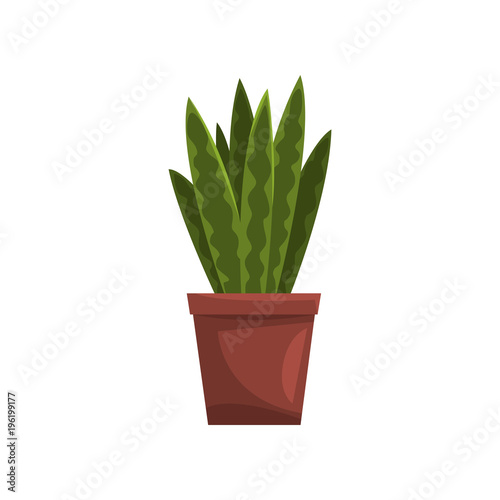 Papiers peints Cactus Snake indoor house plant in brown pot, element for decoration home interior vector Illustration on a white background