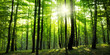 Leinwandbild Motiv forest