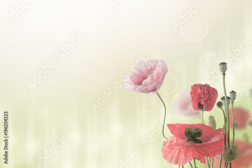 Keuken foto achterwand Bloemen Abstract natural summer or spring floral background with bunch of red and pink poppy flowers with copy space