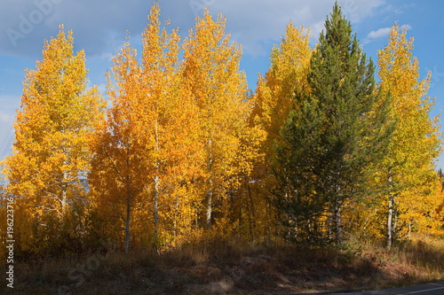 Foto op Canvas Herfst Beautiful autumn in Grand Teton NP in Wyoming in the USA