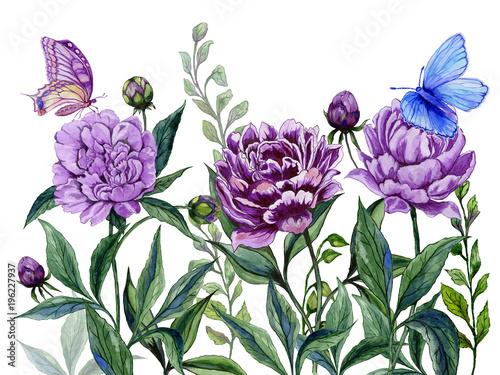 Piękne fioletowe kwiaty piwonii na łodygach z zielonych liści i jasnych motyli siedzą na nich. Pojedynczo na białym tle. Malarstwo akwarelowe.