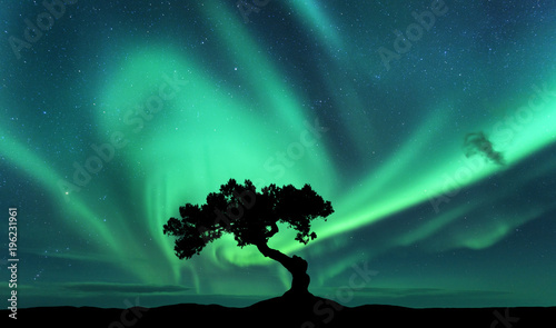 Aurora borealis and silhouette of a tree on the hill. Aurora. Green northern lights. Sky with stars and polar lights. Night landscape with bright aurora, tree, dark sky. Nature background. Concept