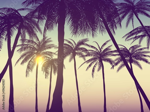 Photo  Summer california tumblr backgrounds set with palms, sky and sunset