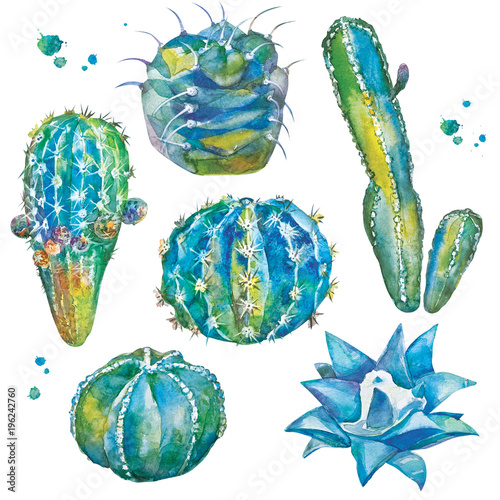 Poster Vogels, bijen Cactus set in watercolor style. Set with different forms of cacti and watercolor splashes. Isolated plants on white background.