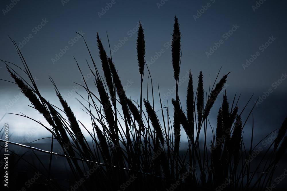 Valokuva Cornstalks on a dune at moonlight
