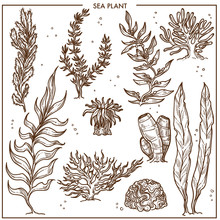 Sea Plants With Long Stems Or Hard Outer Surface