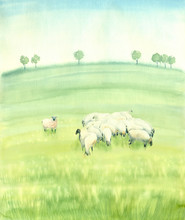 Watercolor Painting Landscape. Sheep In The Summer Meadow.