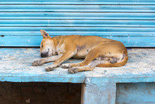 Homeless Dog Sleeping In India