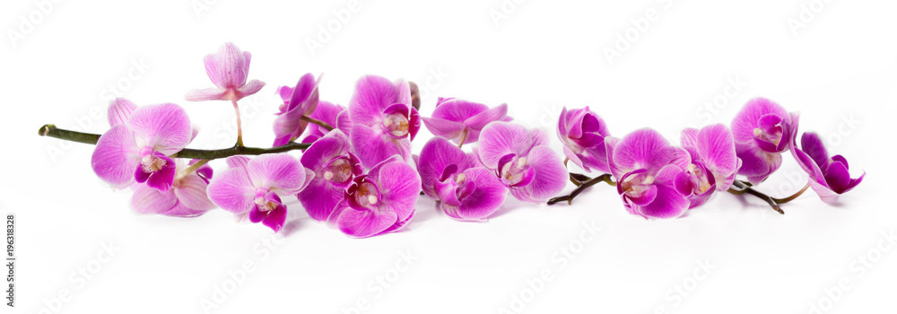 Fototapety, obrazy: orchid isolated on white