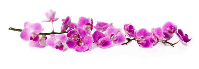 Fototapeta na wymiar orchid isolated on white