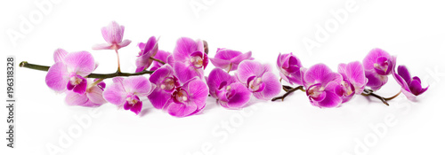 Autocollant pour porte Orchidée orchid isolated on white