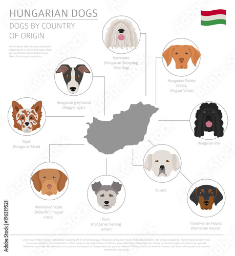 Dogs By Country Of Origin Hungarian Dog Breeds Infographic Template