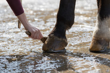 Horse Close-up, Hoof Care With...