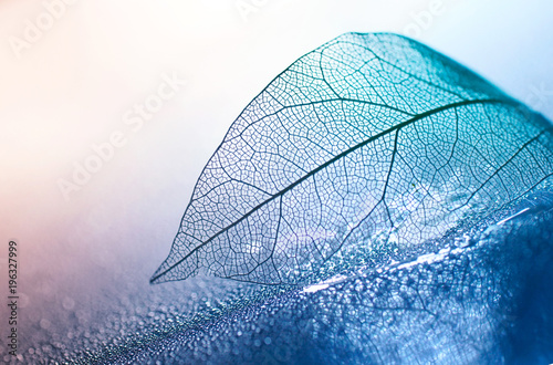 Foto op Canvas Bloemen Transparent skeleton leaf with beautiful texture on a blue and pink background, glass with shiny water drops close-up macro . Bright expressive artistic image nature, free space.