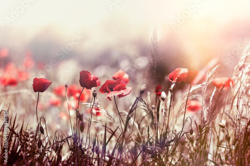 Selective focus on poppy flower, wild poppy flowers in sring meadow - 196338162